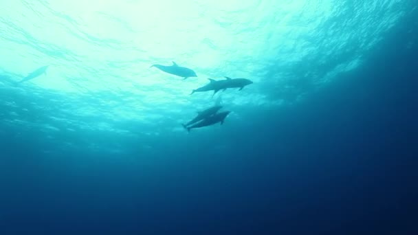 School of dolphins swims underwater near seabed of ocean.