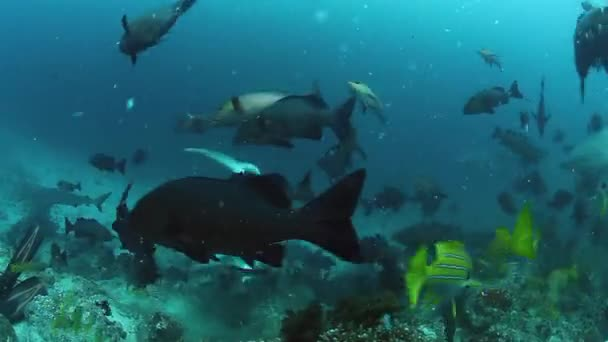 Pack of sharks hunting for fish in underwater ocean of Fiji.