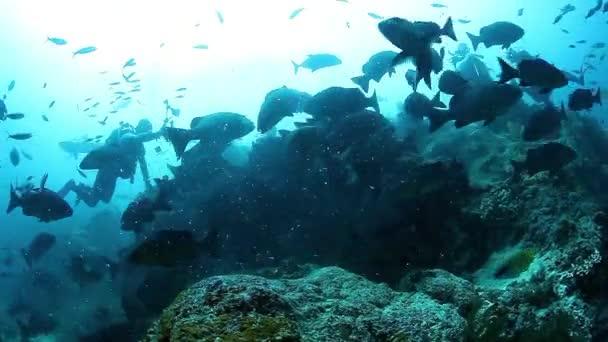 People feed school of fish in underwater marine wildlife of Fiji.