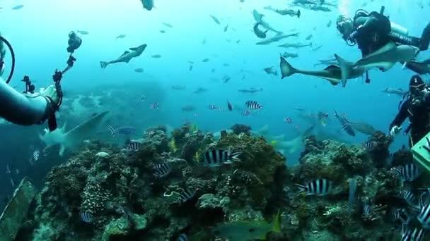 Menschen füttern Haie in Fischschwärmen in der Unterwasserwelt von Fidschi.