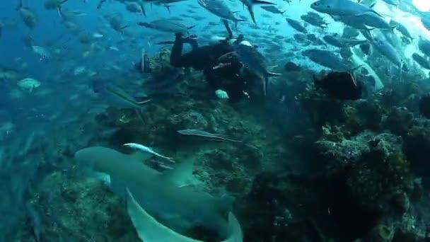 Tauchen mit Haien in Fischschwärmen in der Unterwasserwelt von Fidschi.