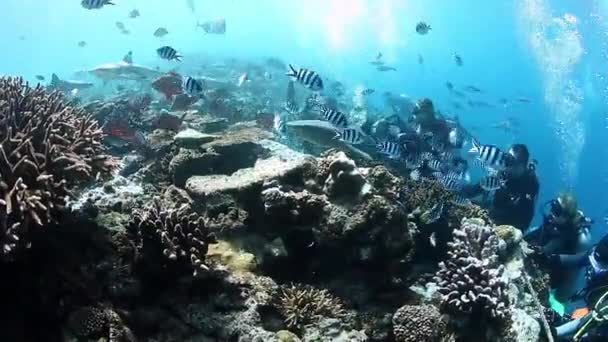 Group of divers hang on the coral reef with reef sharks in underwater ocean.