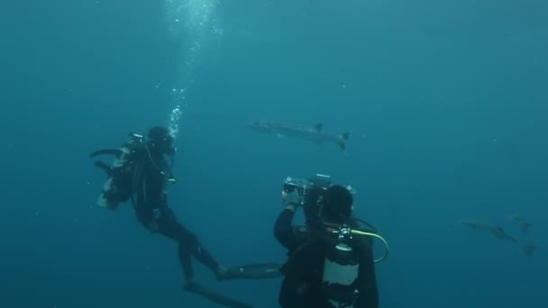 Group of divers makes video about barracuda fish in underwater ocean of Fiji.