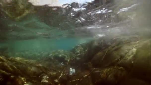 Az Okhotsk tenger alatti fókák.
