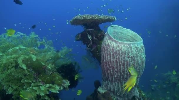 Kemény köves korallok és színes halak kék tenger.