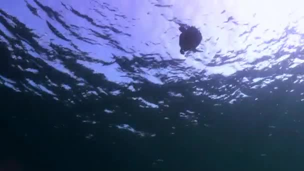 Turtle is immersed below the surface of the reef.