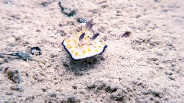 Makrofarbe Nacktschnecke echte Meeresschnecke.