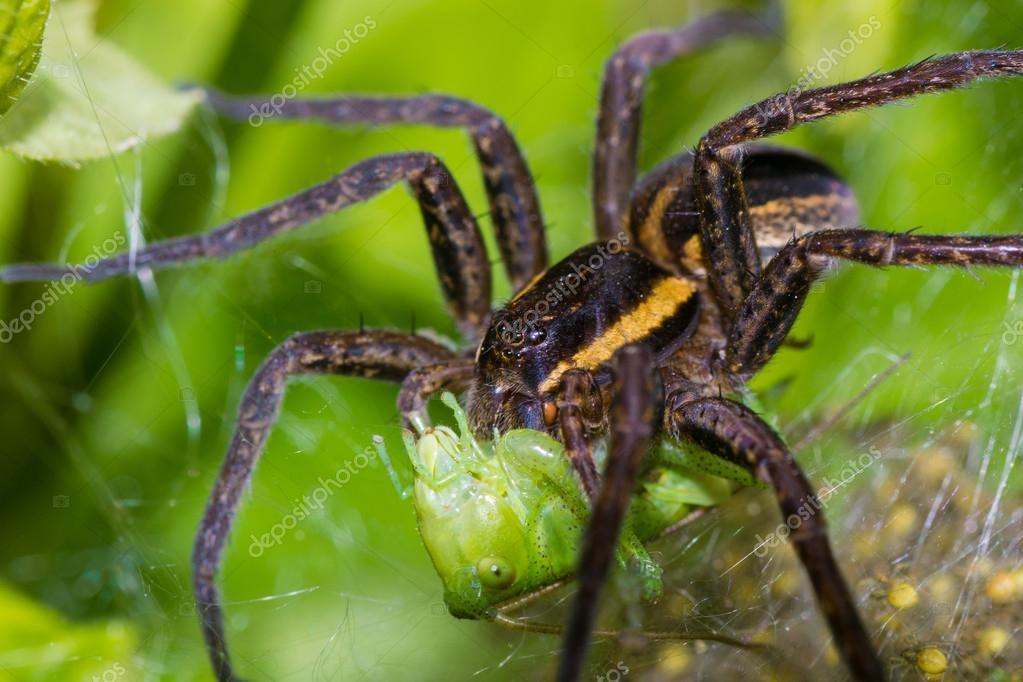 spider nature