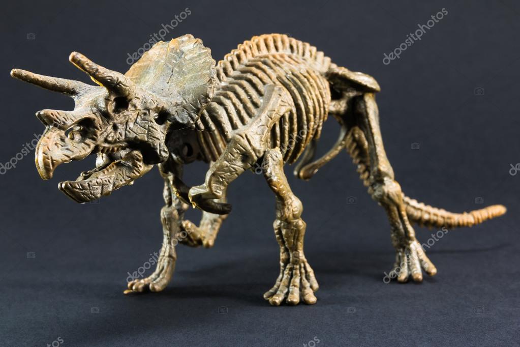 Juguete de modelo de esqueleto fósil de dinosaurio Triceratops ...
