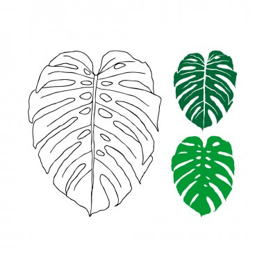 Tropical leaves - Philodendron.