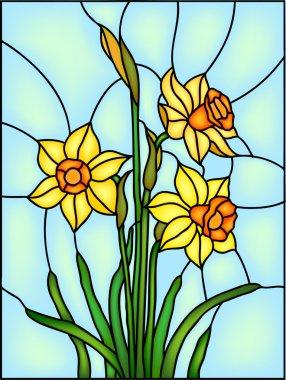 Decorative Narcissus, daffodil flowers