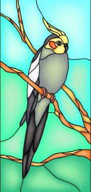 Cockatiel parrot bird
