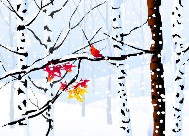 Winter Forest & Winter Landscape