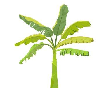 Banana Tree-Vector