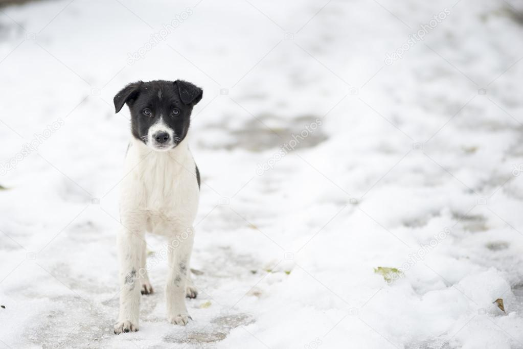 Homeless dog in the snow