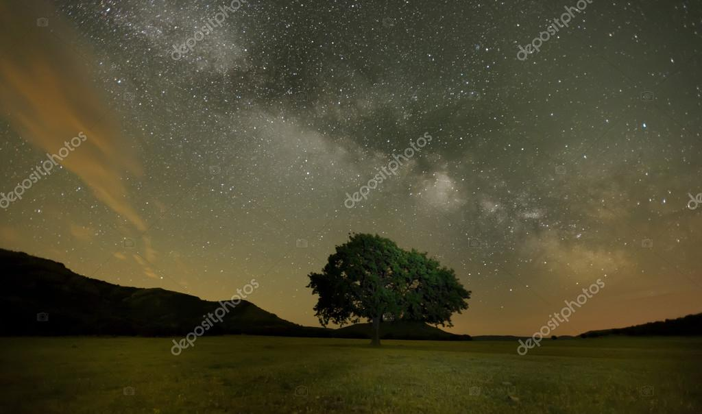 Lonely oak on field under milky way galaxy, Dobrogea, Romania
