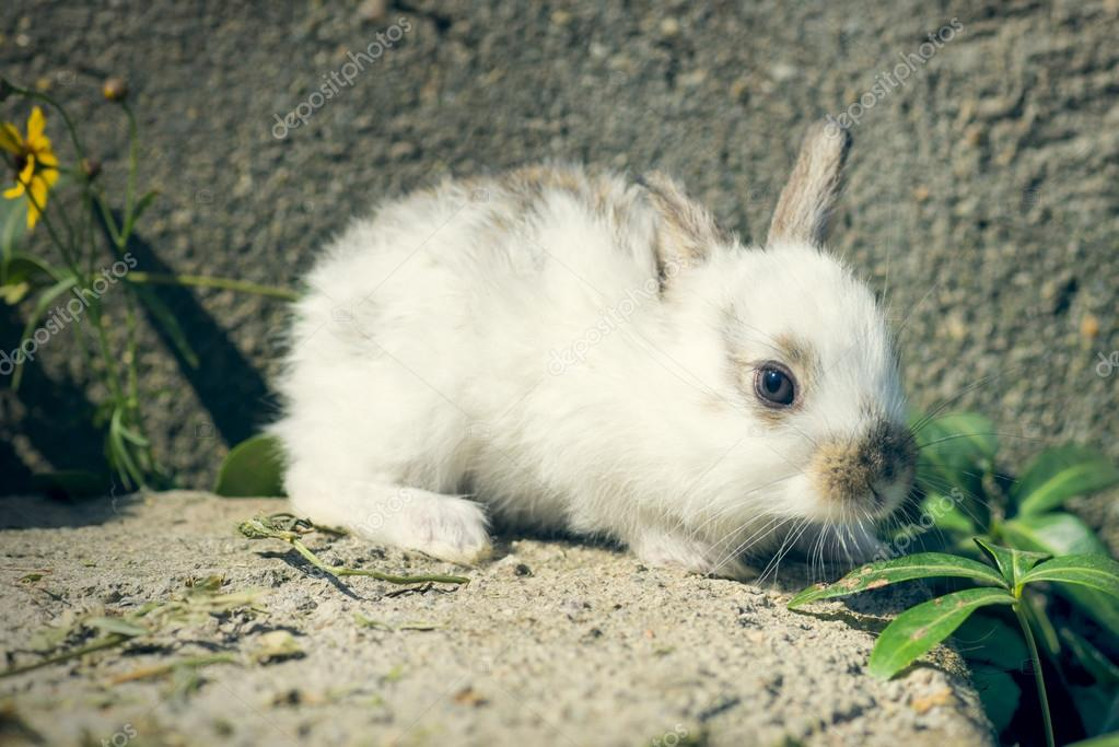 Cute and little rabbit sitting on stone