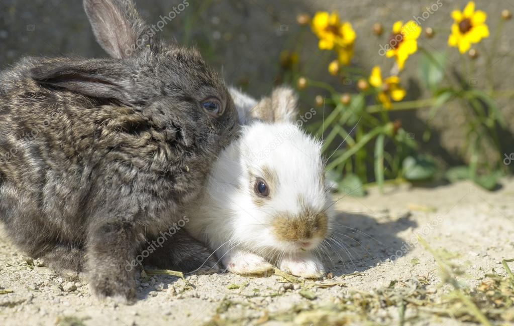 Cute and little rabbits sitting on stone