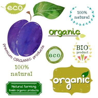 Watercolor plum, 'Organic'  lettering