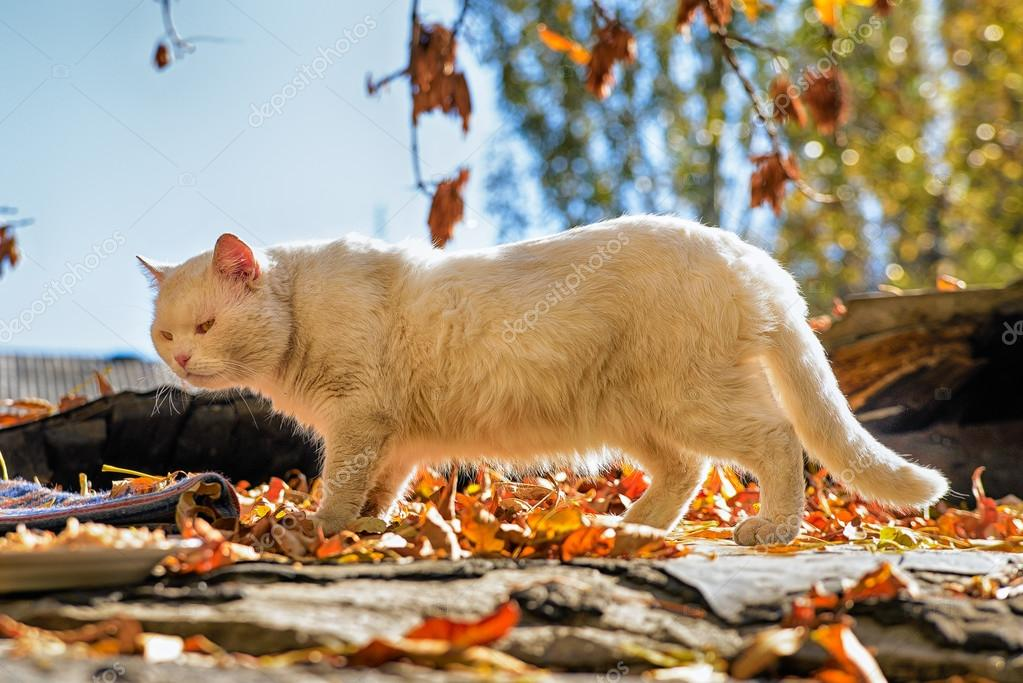 White cat from a shelter