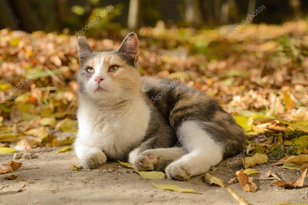 Tricolor cat from a shelter
