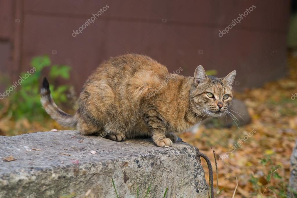 Unusual Red Cat from