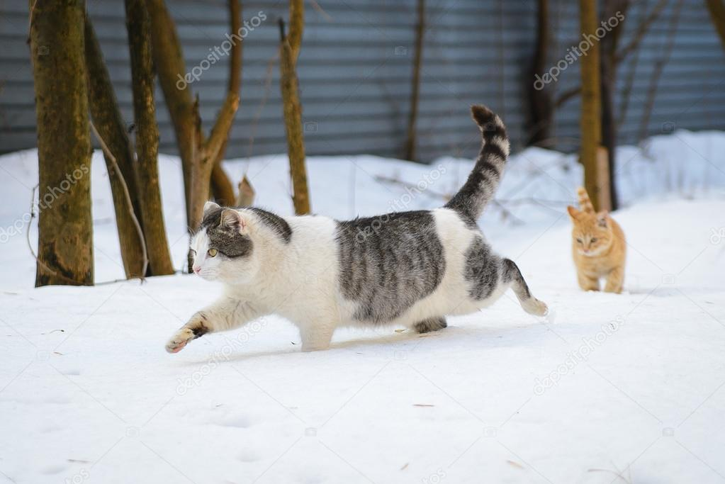 Cat and Kitten Running in the Snow
