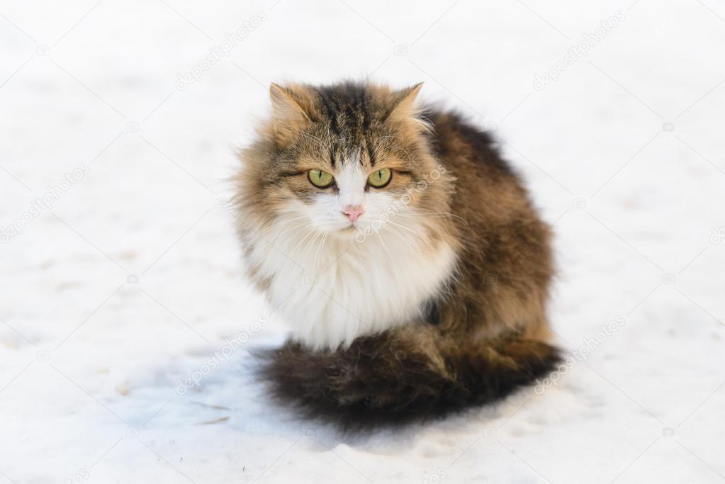 Cat on the Snow