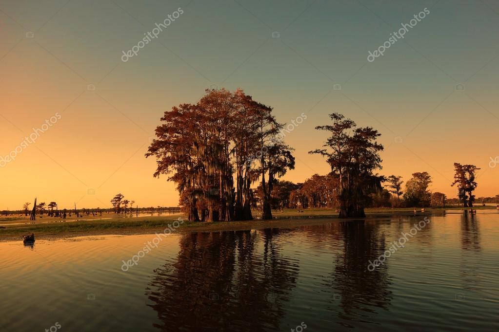 Louisiana bayou and cypress trees