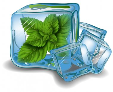 Mint in ice cube. vector