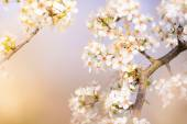 Photo Spring flowers with white blossom