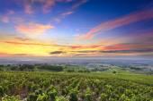 Fotografia Vigneti e Alba, Beaujolais, Rhone, France