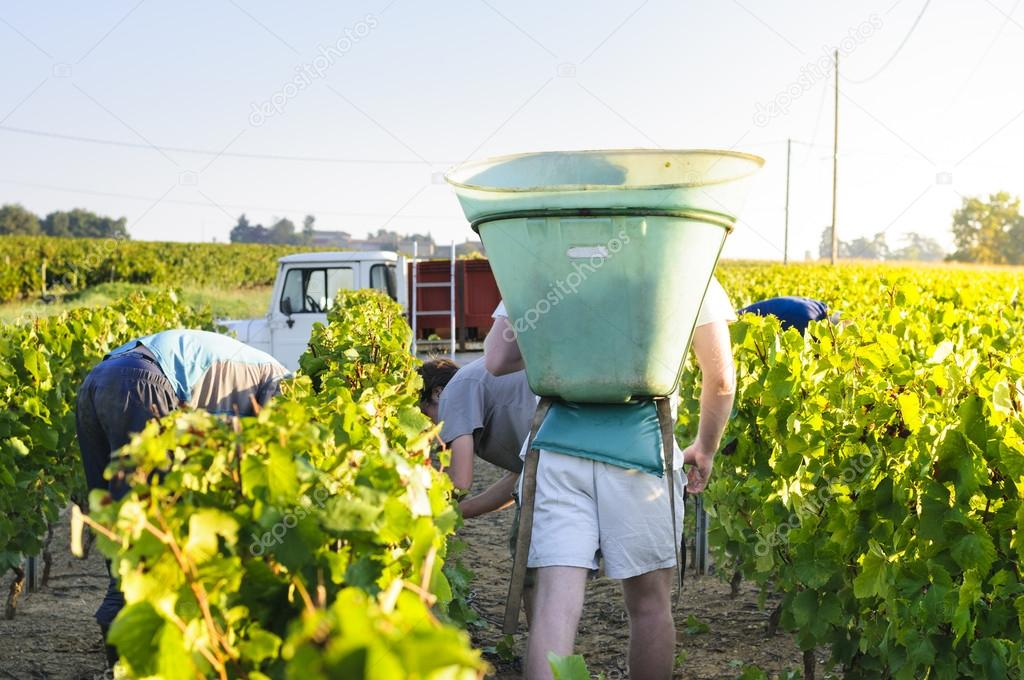 Workers in vineyards, France
