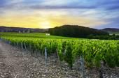 Fotografia Tramonto sui vigneti del Beaujolais, Rhone, France