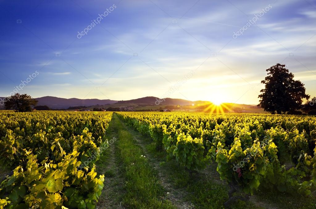 Sunset over vineyards and moutains of Beaujolais, France