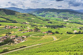 Fotografia Montagne e vigneti del Beaujolais, Francia