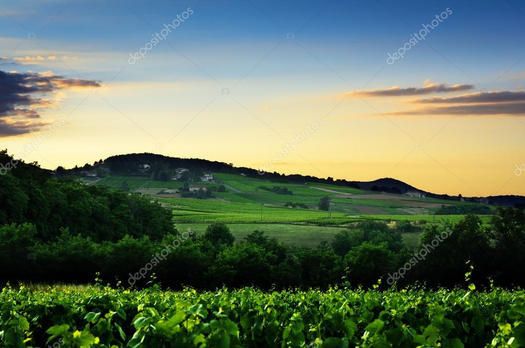Sunset lights over hill and vineyards of Beaujolais land, France