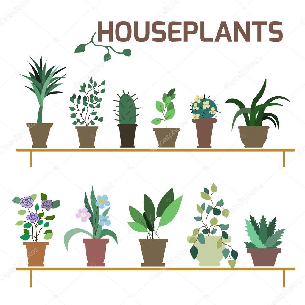 Vector Set of indoor plants in pots.