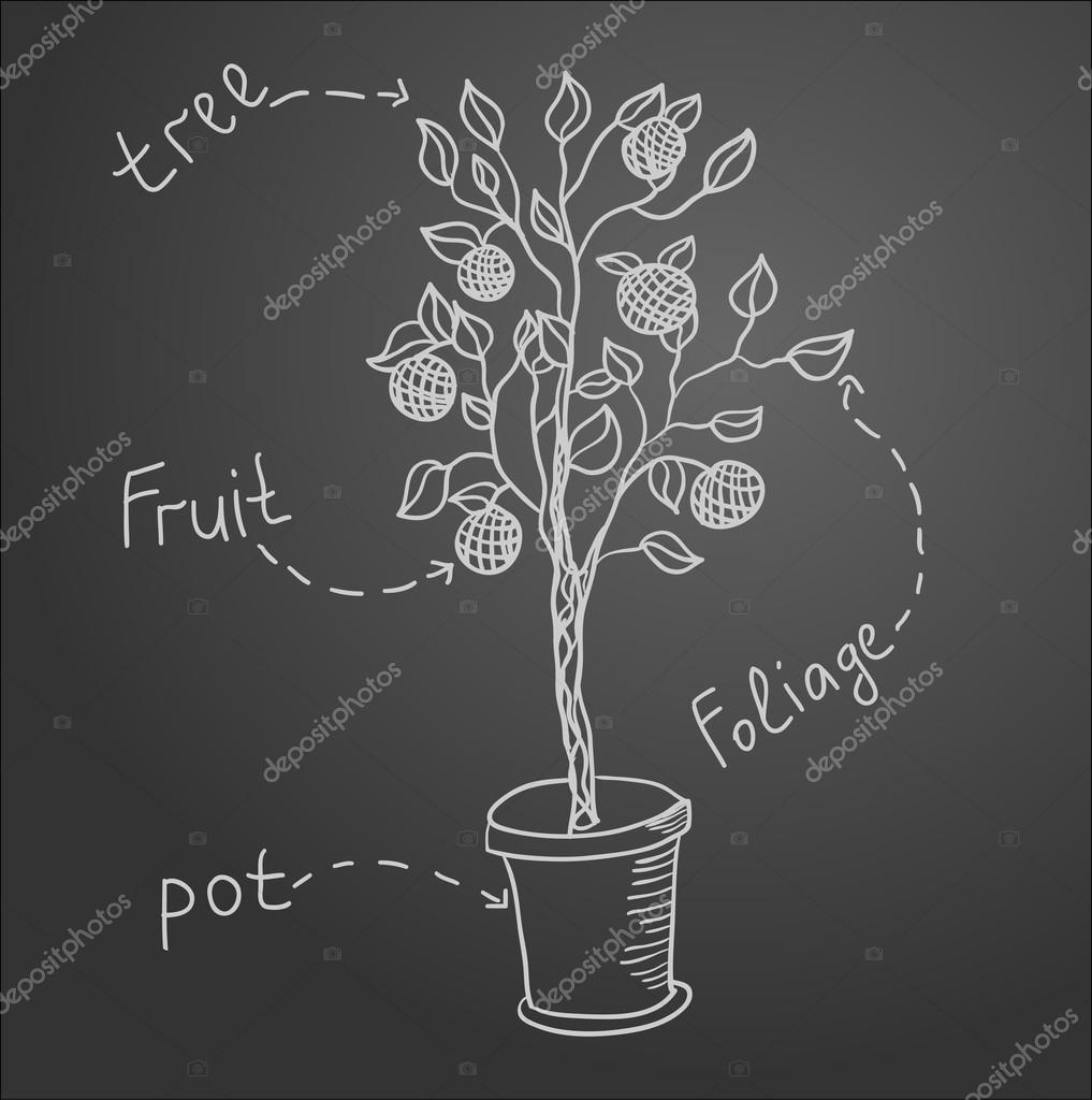 Sketch of tree on black board. Vector