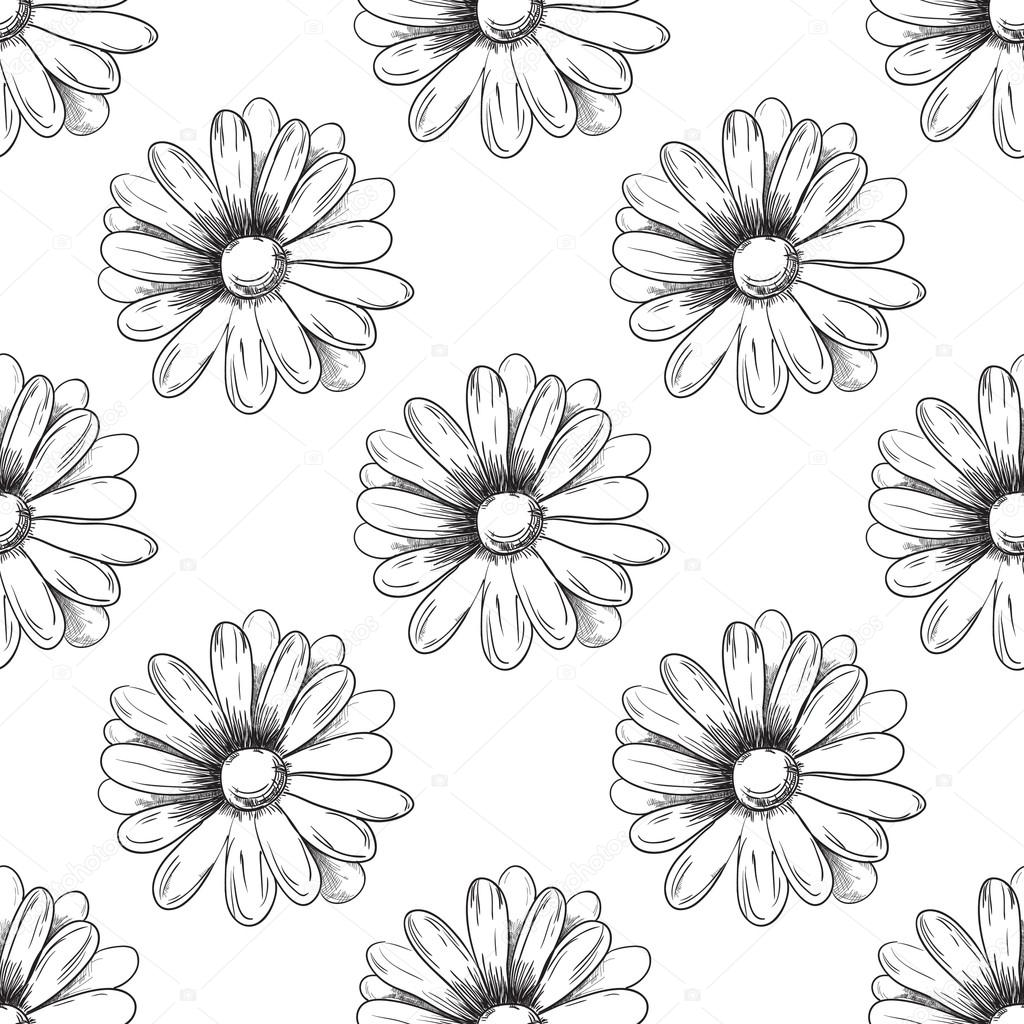 Vector Line Drawing Flower Pattern : Flower pattern camomile drawing vector — stock