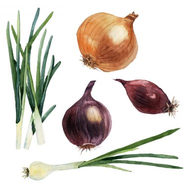 Watercolor set of vegetables. Onions. Vector