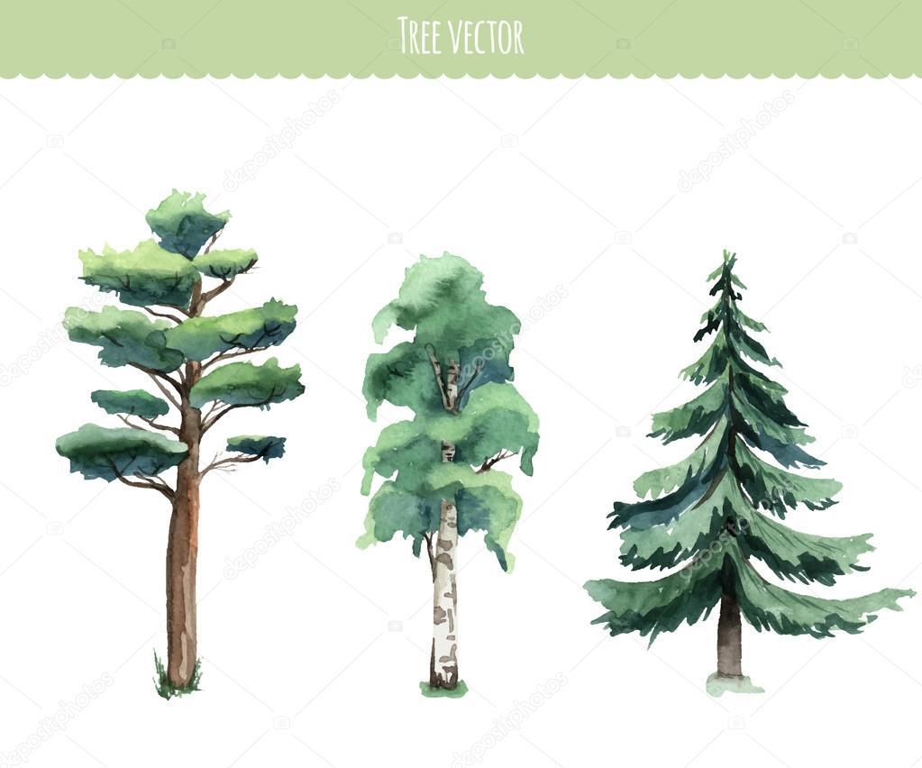 Set of watercolor trees. Birch, pine, fir-tree. Vector illustrat