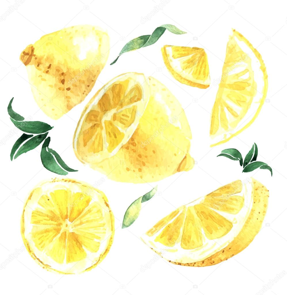 Watercolor set of lemons. Lemon segments, juicy lemon. Vector il