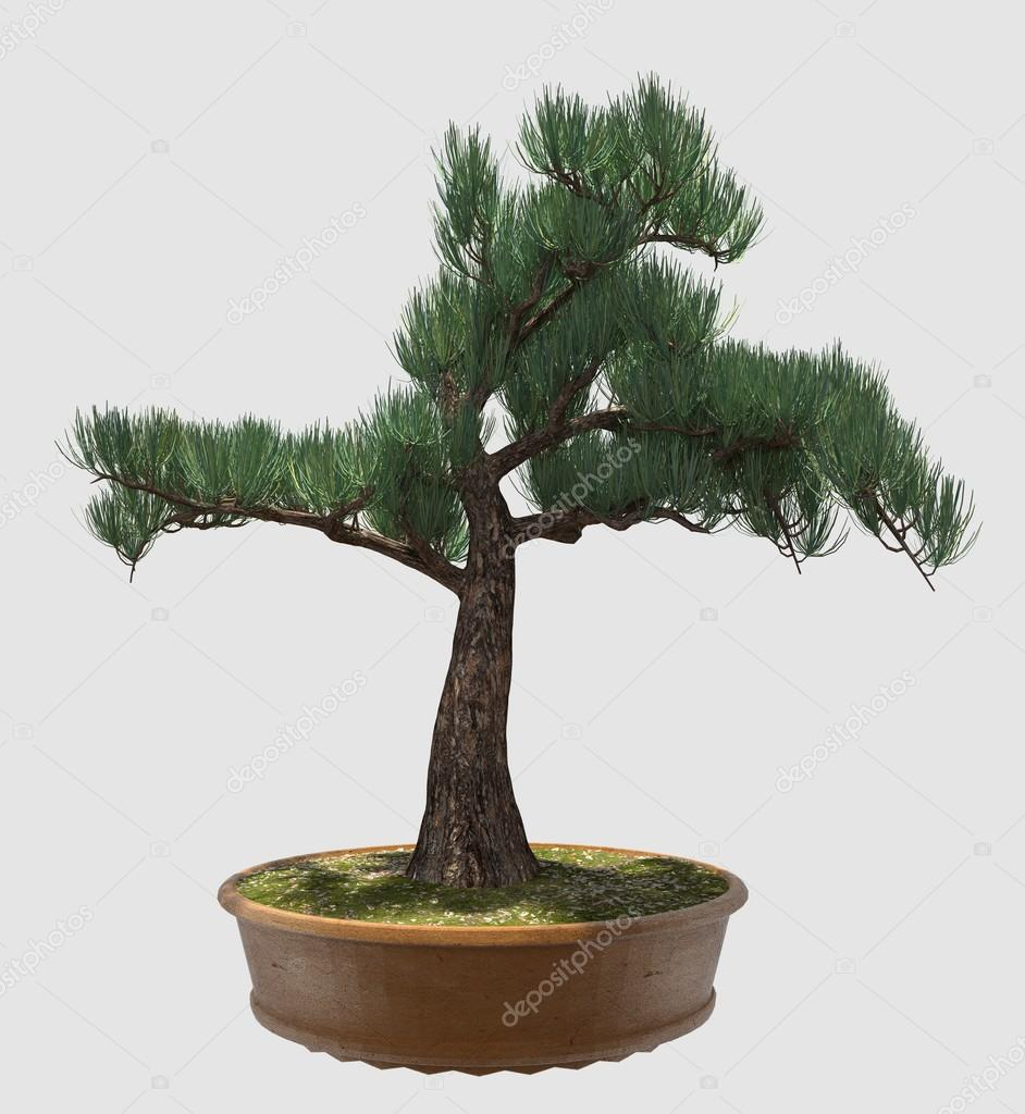 3d Illustration Bonsai Tree Isolated On White Stock Photo C Vik173 111144674