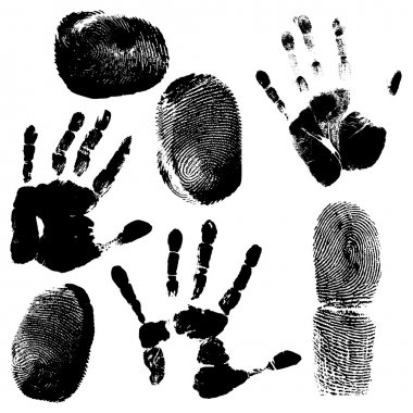 Human fingerprint and hand print