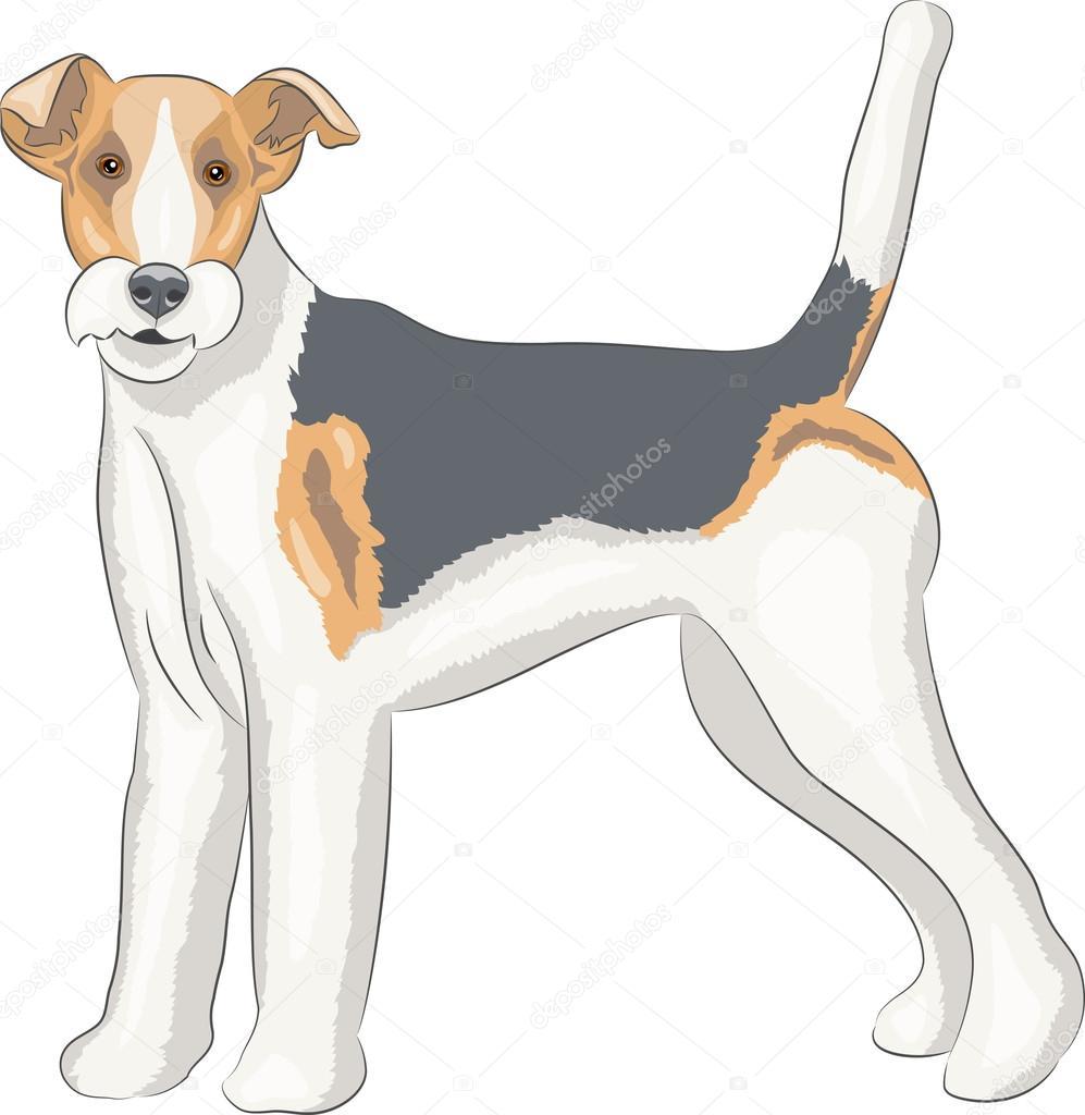 Vektor. Fox terrier — Stockvektor © pillerss #103152020