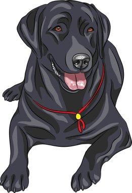 Vector sketch dog breed Labrador Retriever