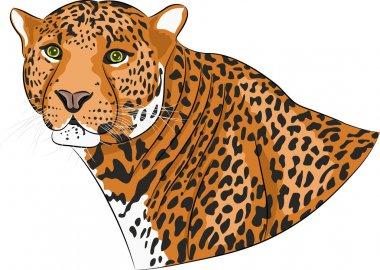 Vector head of a jaguar.