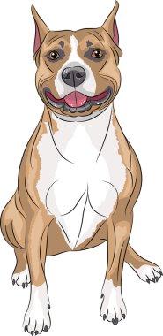 Vector. American Staffordshire Terrier.