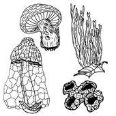 Ryté houby sada